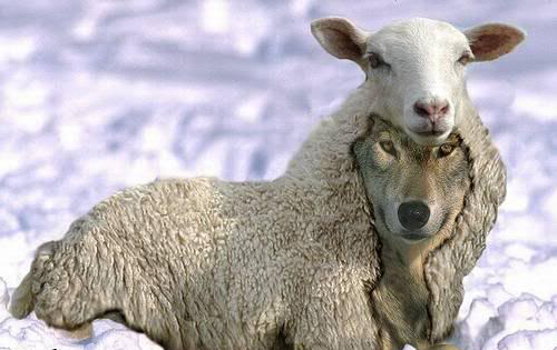 wolf-in-sheeps-clothing